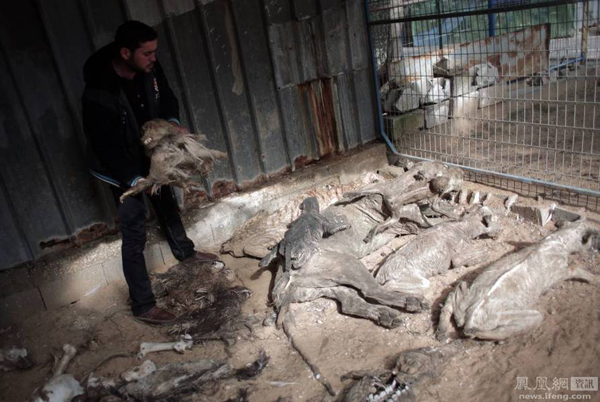 被遗忘的加沙动物园 仅剩几只动物(图) - 西安网