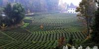 茶产业将成为我省又一特色优势产业 - 农业厅