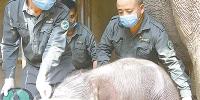 救助亚洲象 一直在行动 - 西安网